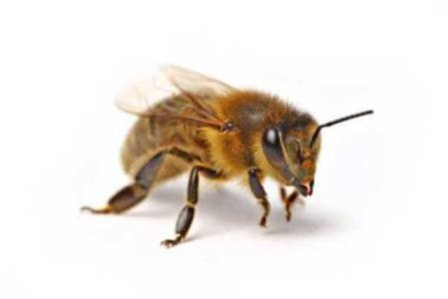 WS VČELKY